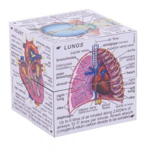 Anatomy Cube, Human Body Systems and Statistics Cube Book