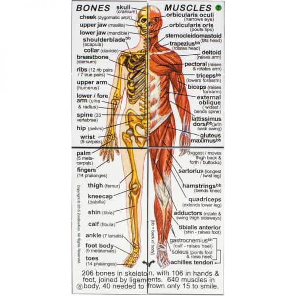 Anatomy of Human Body Systems & Statistics Product